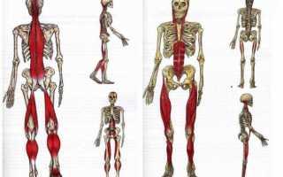 Smartyoga: йога для здоровья и йогатерапия в москве