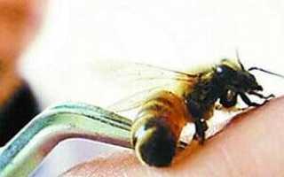Пчелы лечение грыжи на позвоночнике