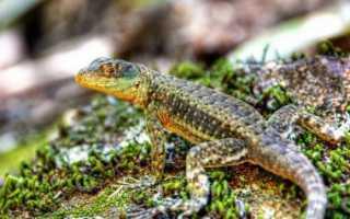 Лекция 13. класс пресмыкающиеся (reptilia)