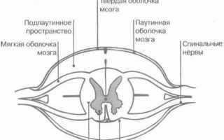 Анатомия проводящих путей нервной системы