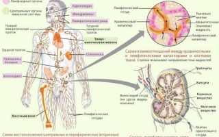 Воспаление околоушных лимфоузлов: причины, симптомы и лечение