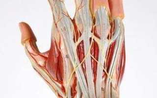 Раны кисти с повреждением сухожилий