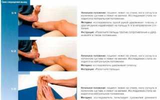 Основные мышцы предплечья и кисти