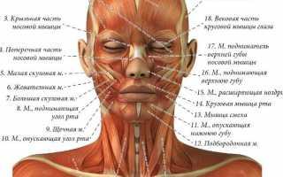 Типы сочленения костей позвоночника