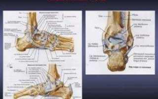 Что такое голеностоп и где он находится: метода лечения заболеваний и симптомы