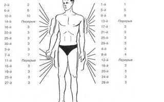 Лечение пчелами суставов, остеохондроза, спины, рассеянного склероза в домашних условиях