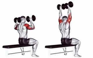 5 тренировочных программ на плечи: руководство для среднего уровня