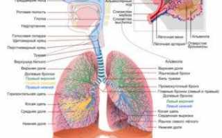 Боли в легких со стороны спины без кашля