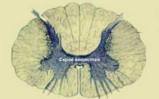 Цнс: головной и спинной мозг