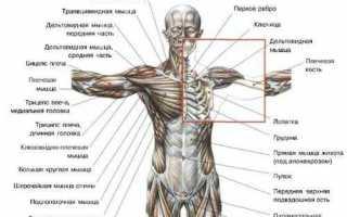 Боли справа сзади под лопаткой: возможные причины и лечение