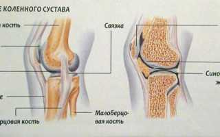 Строение и болезни коленного сустава