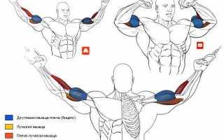 Как увеличить объем рук: эффективные упражнения на брахиалис