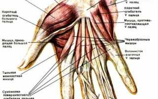 Как накачать запястья рук? мифы, лучшие советы и тренировки для укрепления кисти рук