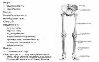 Реберно-поперечный сустав и его заболевания