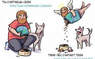 Если собака лижет ноги хозяину: нормально ли такое поведение питомца или стоит насторожиться